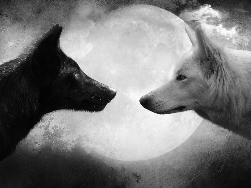foto do lobo 800x600 - Será que você está [DO LADO CERTO?!]